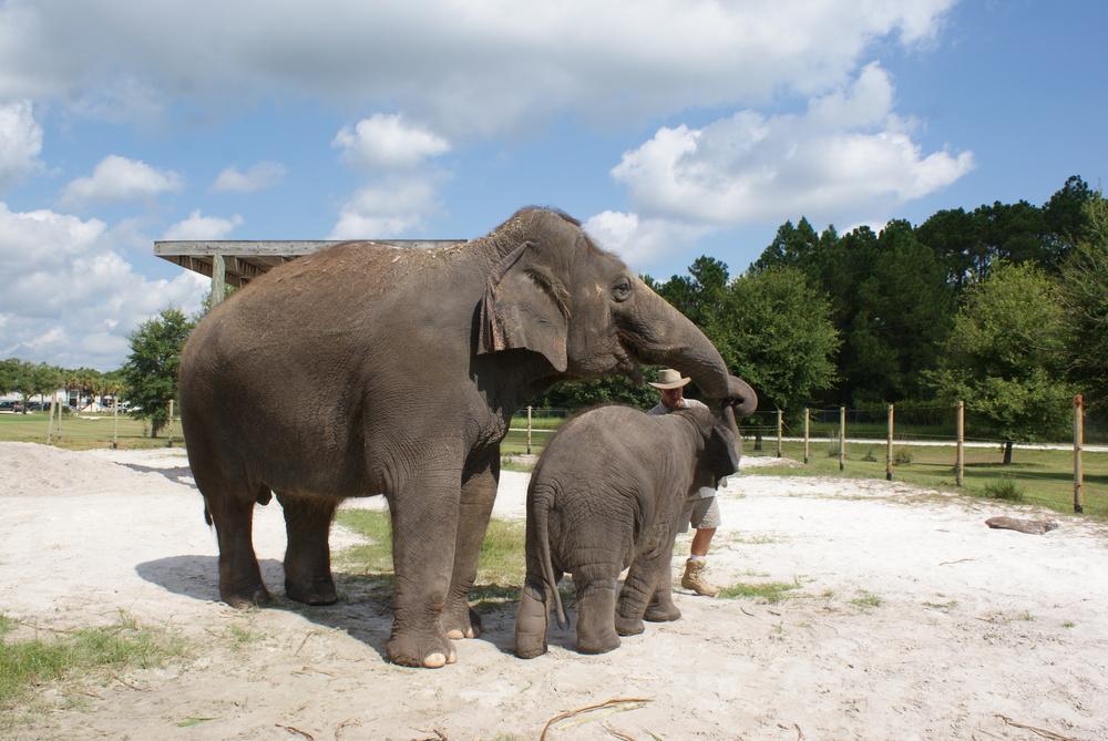 Elephant Conservation Ctr Aug 2014 172.JPG