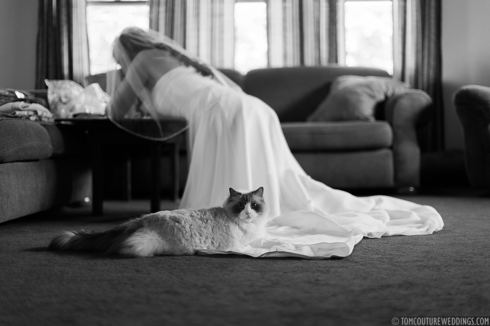 Here's a cat photobombing me while Danielle was writing her vows...