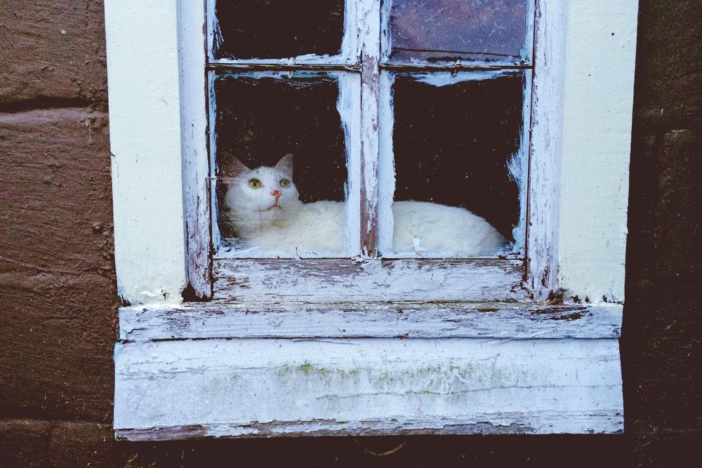 kittenwindow.jpg
