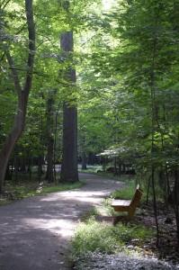 Trail-2-199x300.jpg