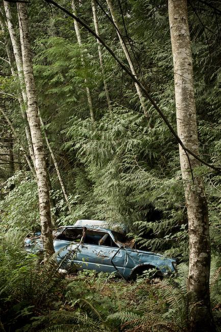 Muir Creek Car