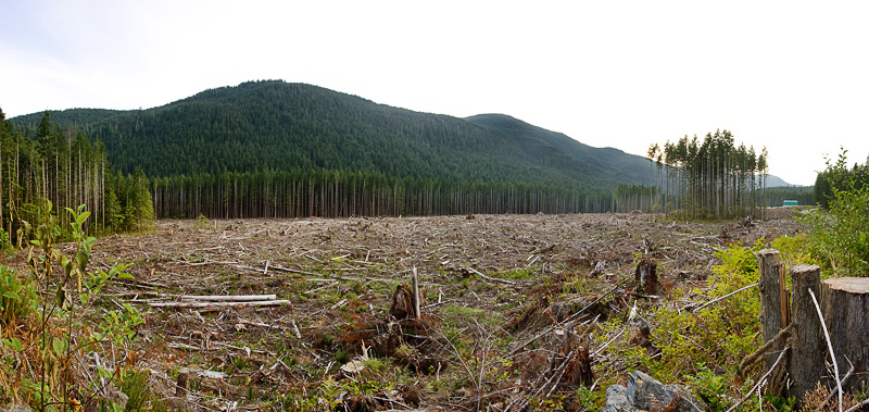 Second_Growth_Clearcut_Panorama