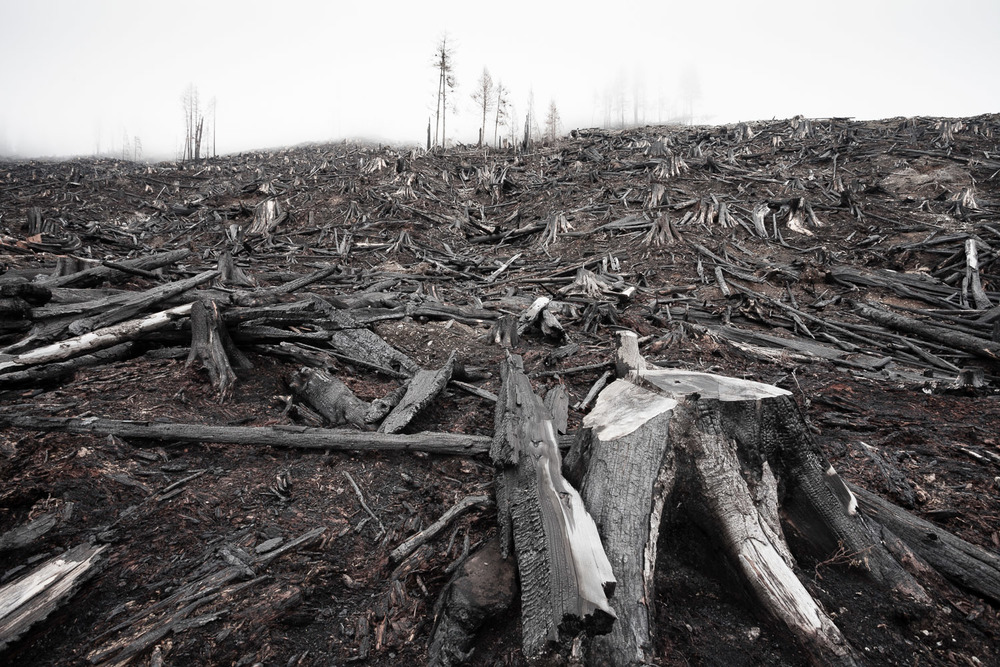 burnt-clearcut-vancouver-island-logging.jpg