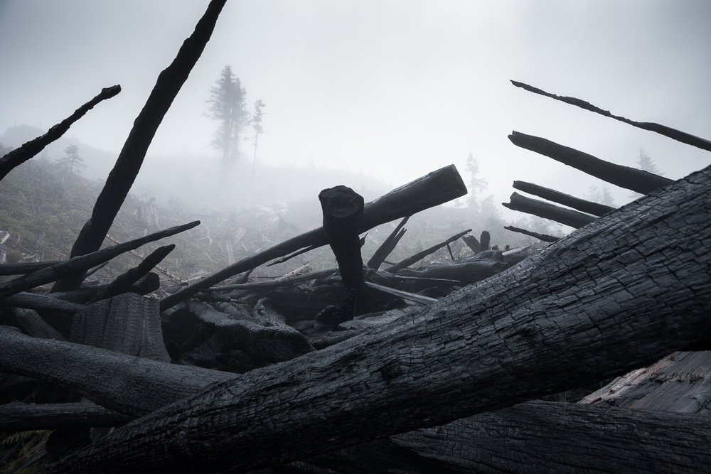 burnt-wood-klanawa-vancouver-island.jpg