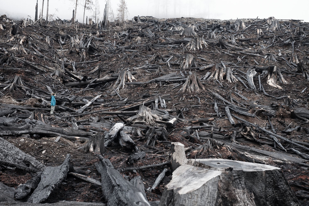 2014 Environmental Photographer of the Year shortlisted image of burnt clearcut by TJ Watt