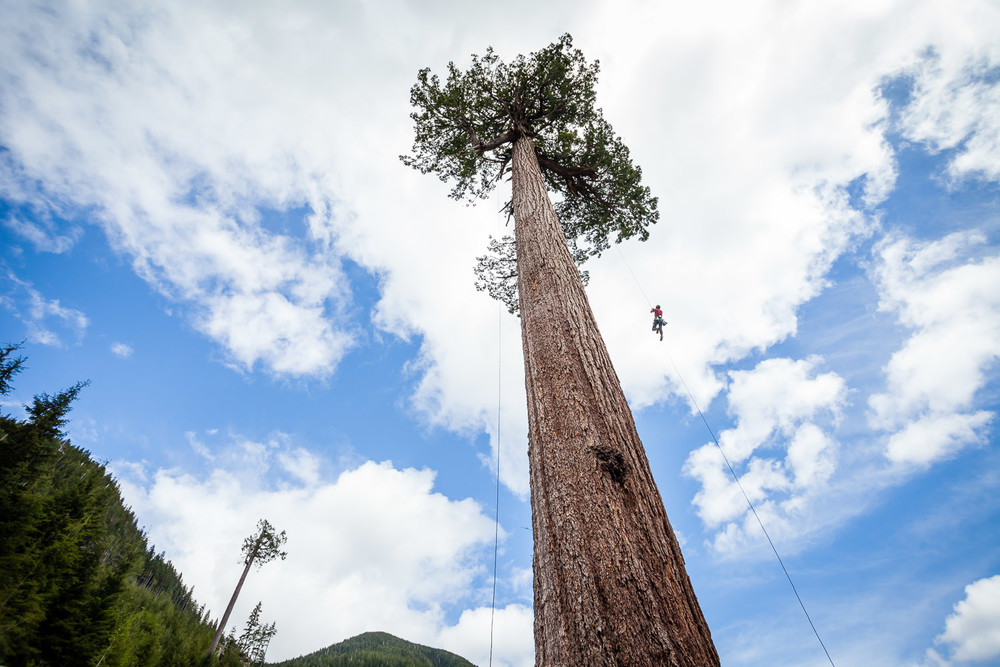A tree climber heads toward the sky in Big Lonely Doug.