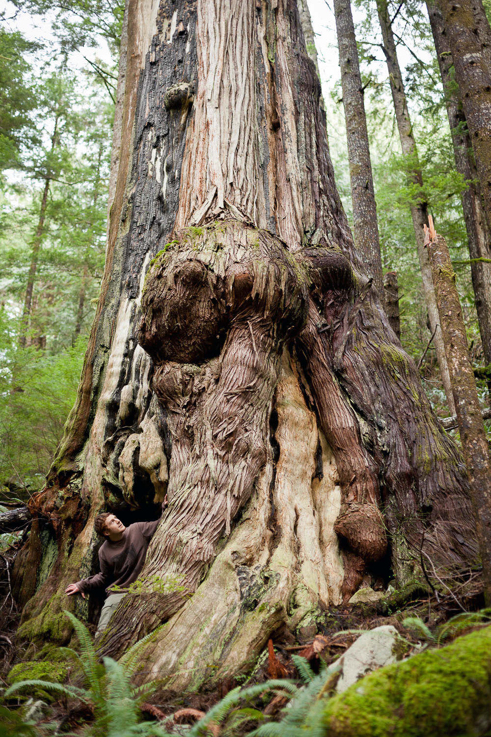 You just never know what you might find when exploring. I came across this giant burly western redcedar tree while on a solo bushwhack in the Gordon River Valley outside of Port Renfrew on Vancouver Island in 2012.