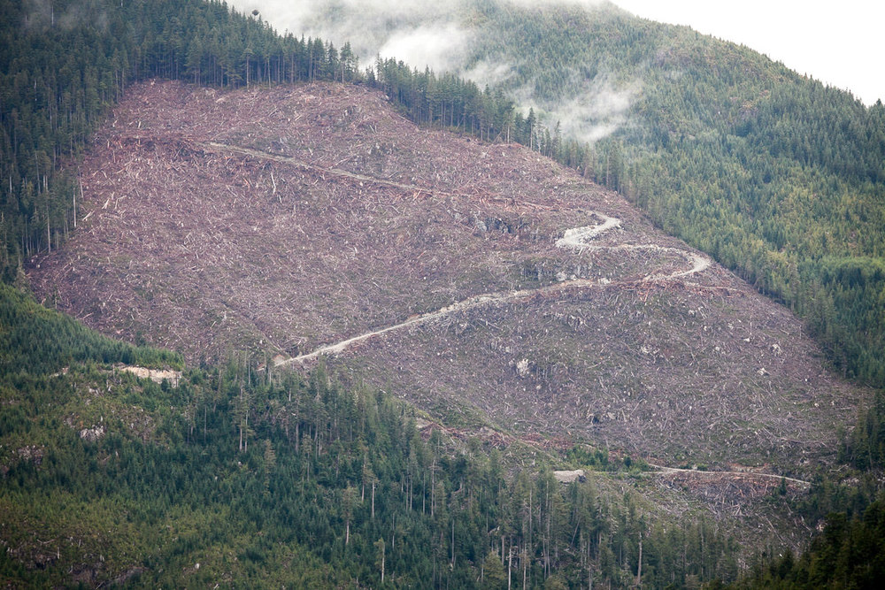 clearcut-logging-vancouver-island-7.jpg