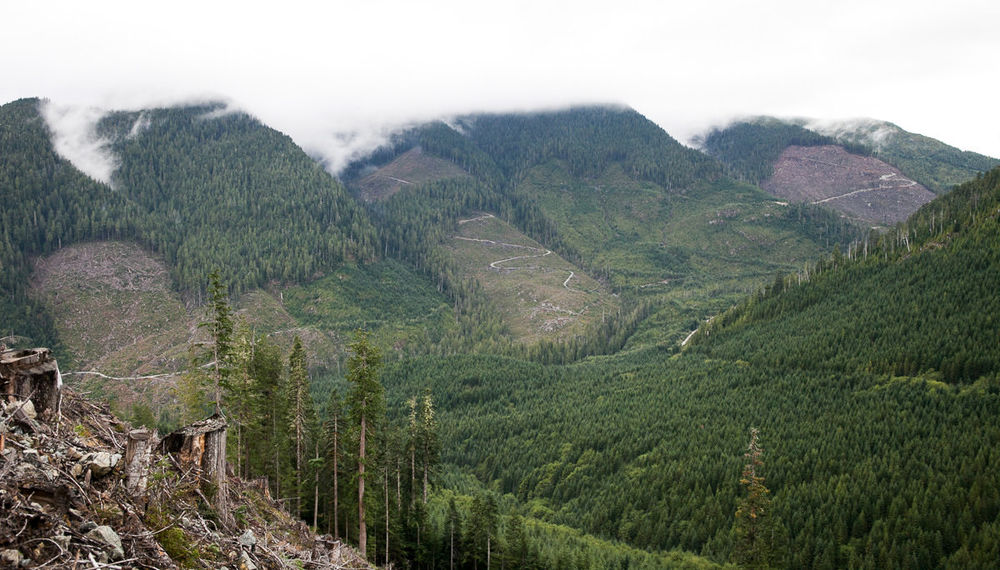 clearcut-logging-vancouver-island-8.jpg