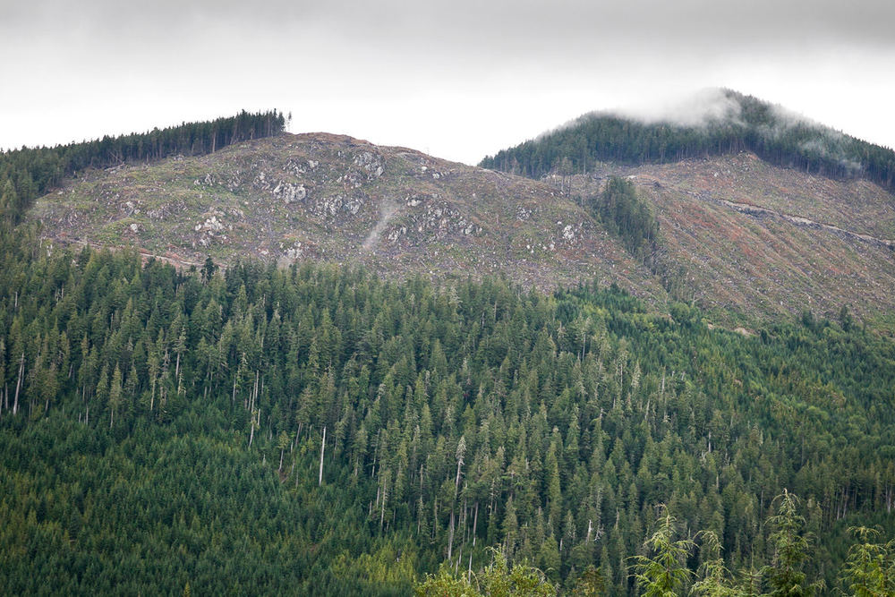 clearcut-logging-vancouver-island-10.jpg