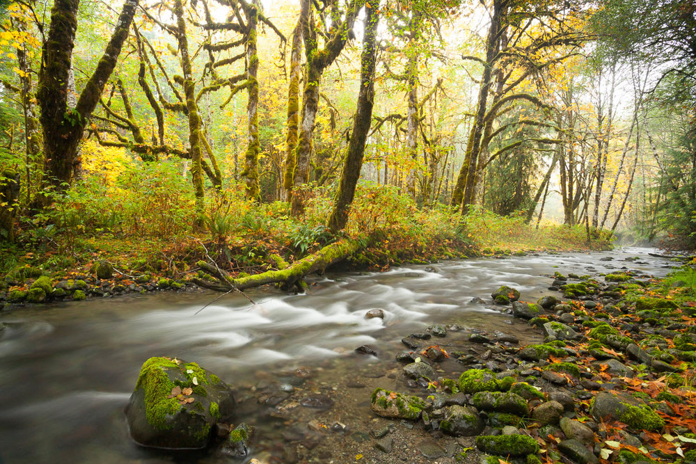 Fall colours along a creek near Lake Cowichan on southern Vancouver Island, BC.