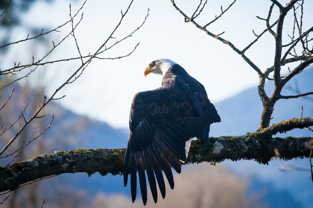 Eagle-Harrison-Mills-2014-4.jpg