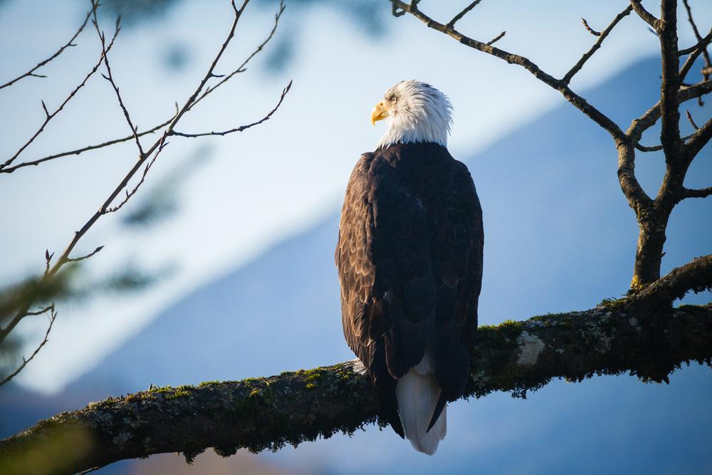 Eagle-Harrison-Mills-2014-2.jpg