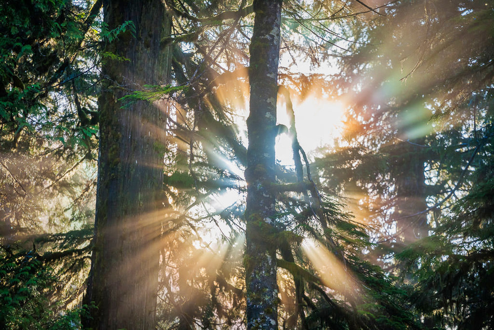 One constant throughout the years is the stunning and surprising beauty of nature. Almost like magic, fleeting moments of sheer natural wonder pop in and out of existence, treating one to the most dazzling displays of colour and form. Seen here, rainbow fog beams shine through the old-growth forests of the Upper Walbran Valley early in the morning.