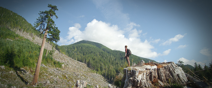 Looking towards Big Lonely Doug from the top of a giant redcedar stump clearcut in the Gordon River Valley near Port Renfrew in 2012.