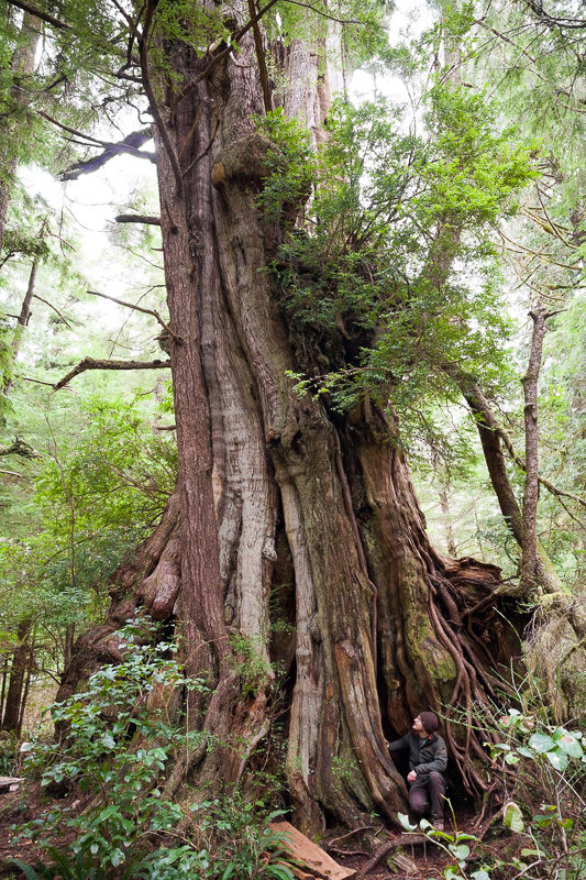 hanging-garden-tree-backside.jpg