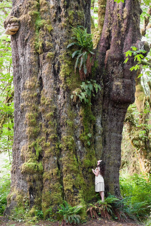 San Juan Spruce, Canada's largest spruce tree - Port Renfrew, BC