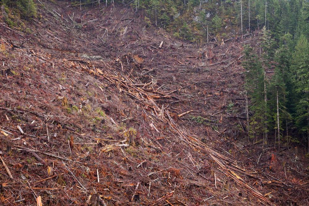tj-watt-upper-walbran-logging-70.jpg