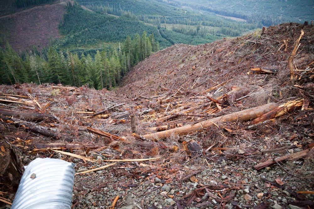 tj-watt-upper-walbran-logging-124.jpg