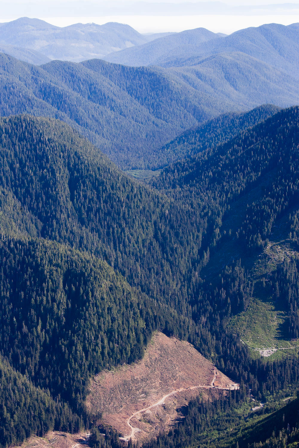 Active old-growth logging by Western Forest Products near the top of the Carmanah Valley, just outside the park boundaries.