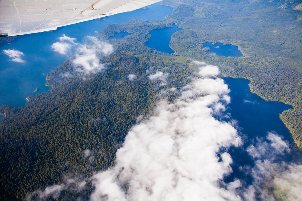 Looking down towards the old-growth forests surrounding Cheewhat Lake (right), home to Canada's largest tree!