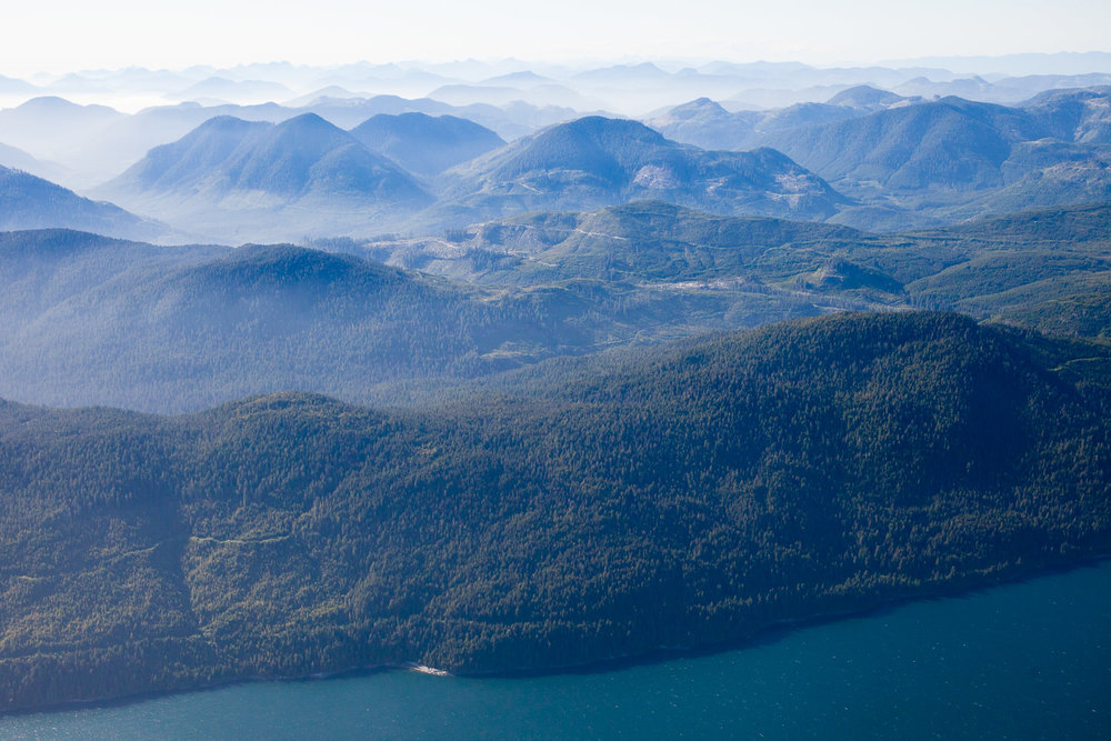 Unprotected old-growth forests that flank the west side of Nitinat Lake - a top conservation priority!