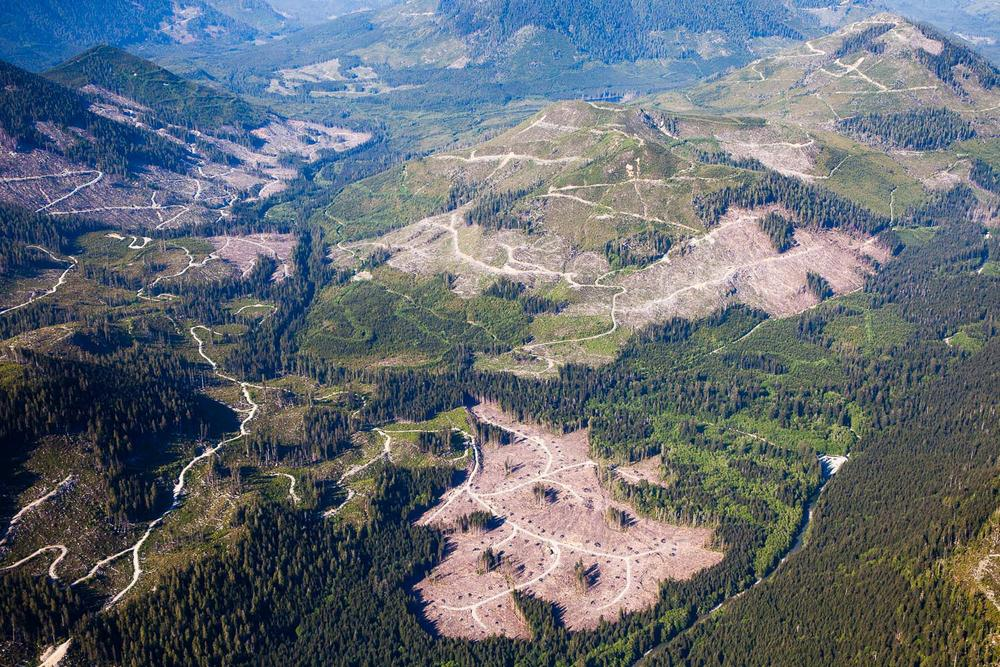 Western Forest Products logging - Klanawa Valley, TFL 44.