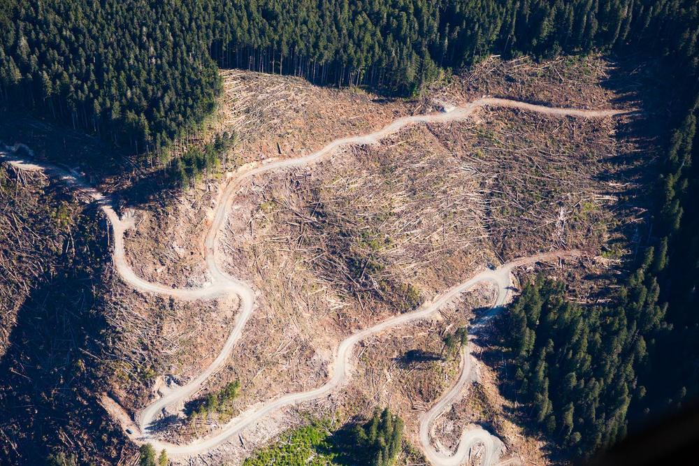 Klanawa Valley - Old-growth logging by Western Forest Products bordering the edge of the Pacific Rim National Park Reserve near the Nitinat Triangle.
