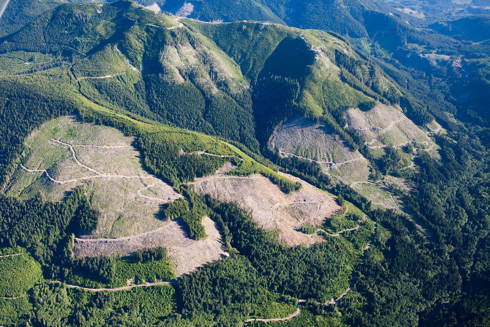 Second-growth logging - Lake Cowichan area.