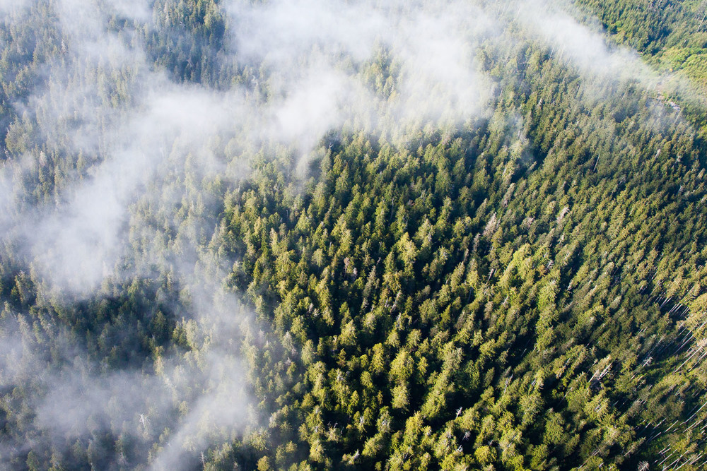 Ancient forests from above.