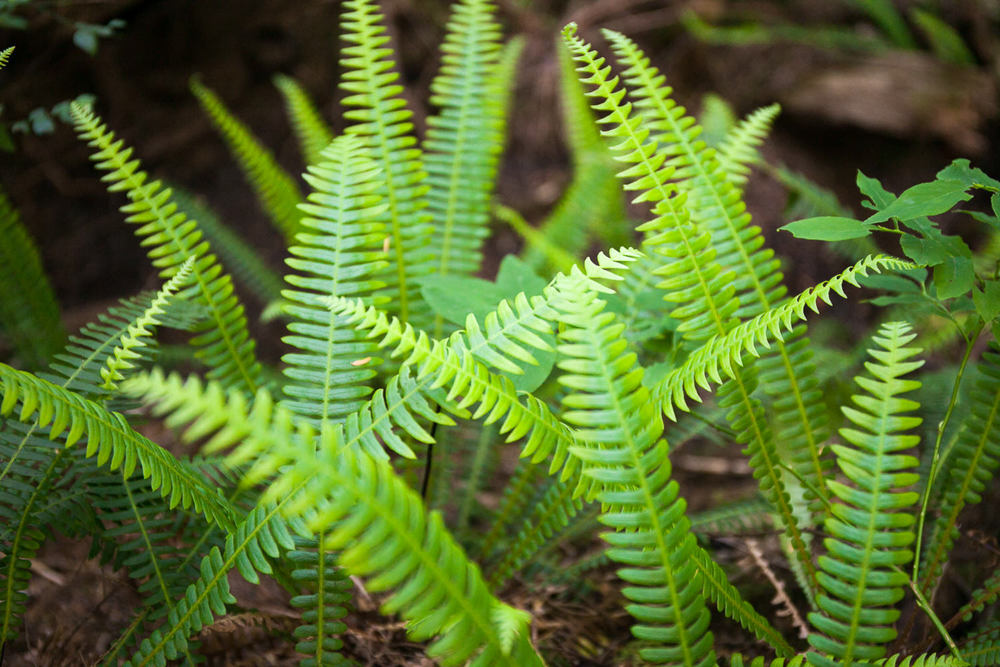 avatar-grove-green-ferns-forest.jpg