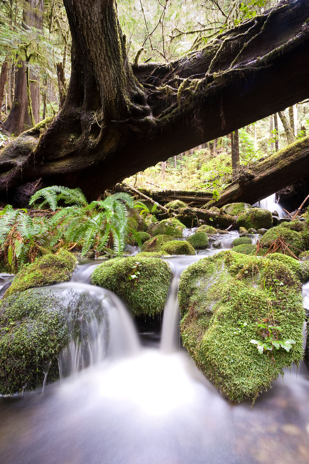 avatar-grove-water-creek-moss.jpg