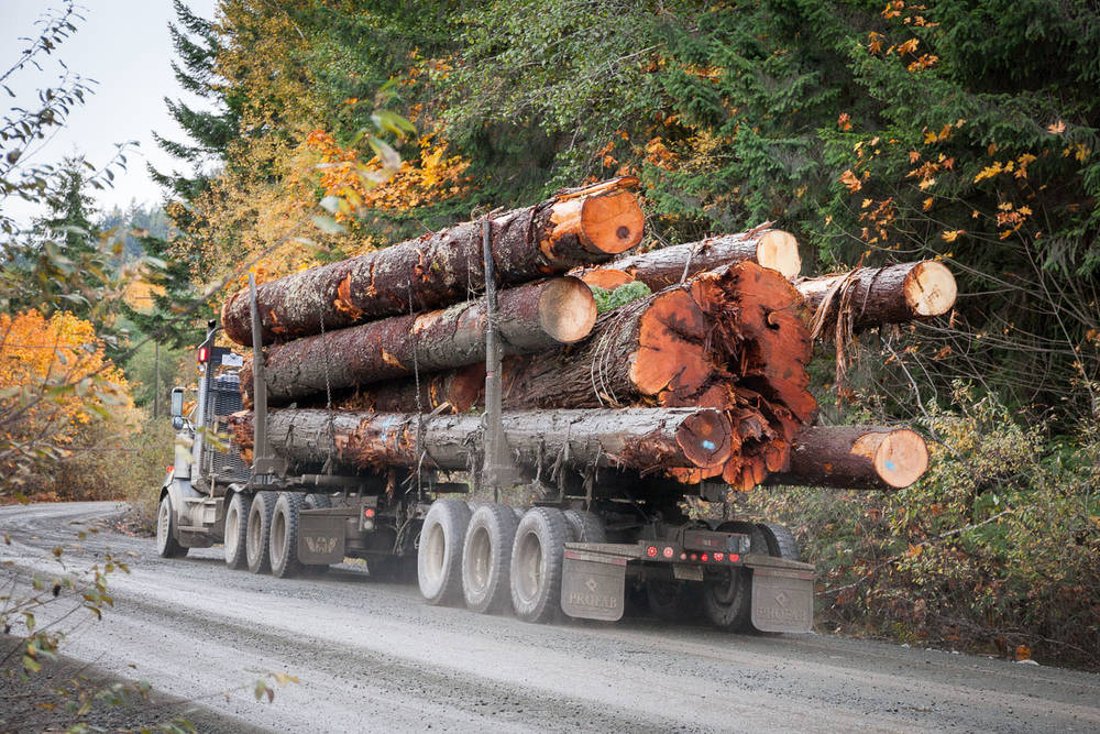 walbran-valley-big-log-truck.jpg