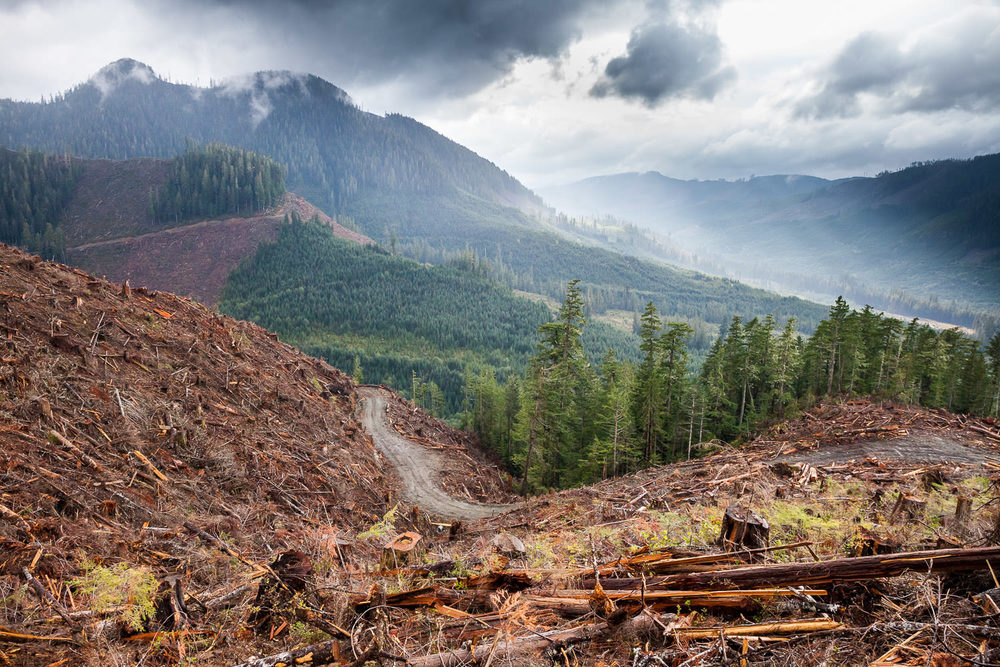 walbran-valley-clearcut-hillside-logging.jpg