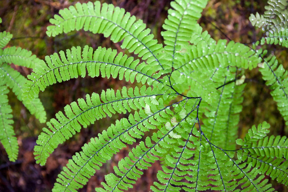 walbran-valley-deer-fern-green.jpg