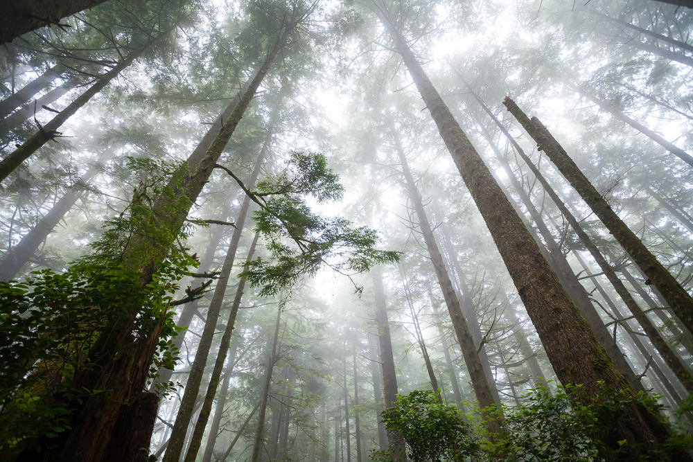 west-coast-trail-foggy-forest.jpg