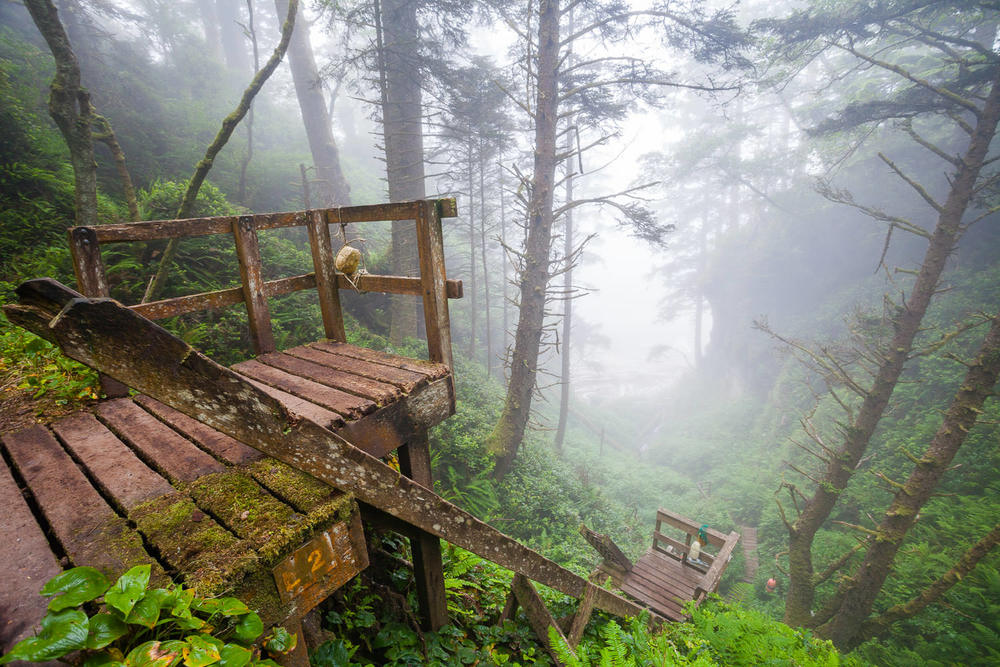 west-coast-trail-ladders-mist.jpg