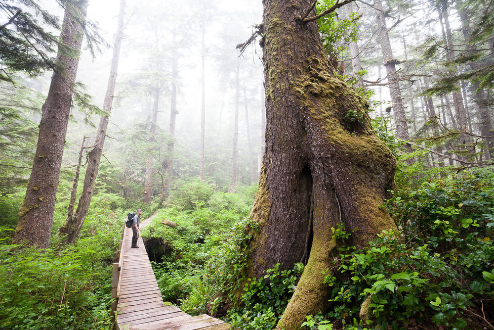 west-coast-trail-rainforest-boardwalk.jpg