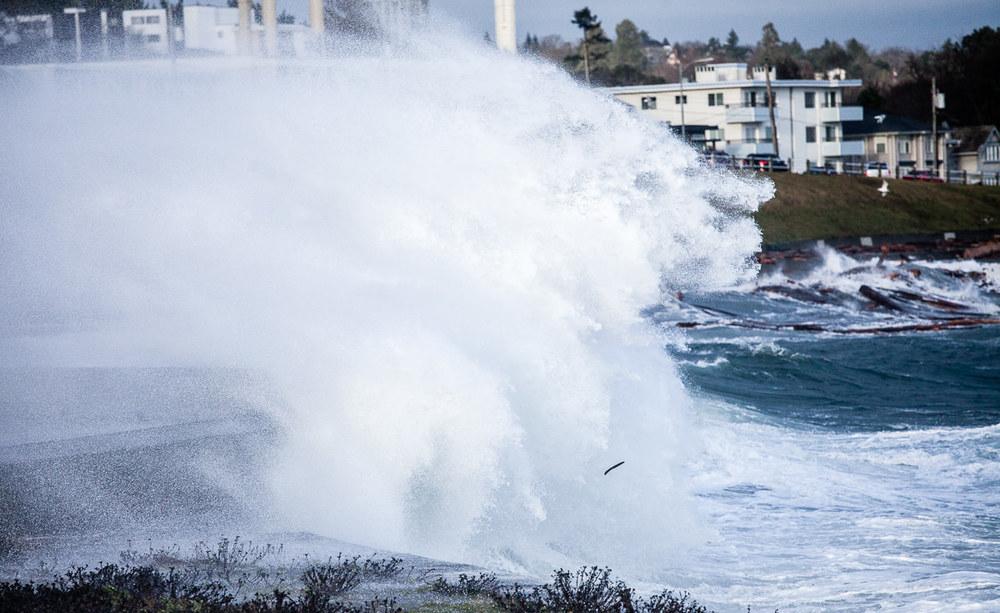 wind-storm-victoria-bc-tj-watt-246.jpg