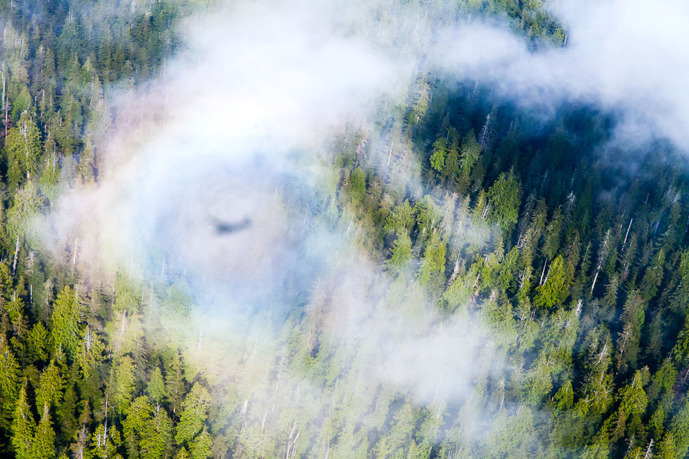 This image was captured on my first flight with Nick Temos of the Pacific Northwest Collective in early 2015. Here, the shadow of our plane is encircled within a rainbow high above the towering forests around Cheewhat Lake, home to Canada's largest tree. We took this special sight as a good omen for times to come. Nick has since generously volunteered much of his time flying us over Vancouver Island to document ancient forests and the impacts of logging from above. A good friend with a great heart, I thank Nick for the unforgettable experiences we've had already and those still unwritten.