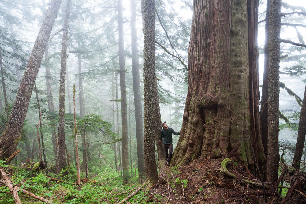 I am forever grateful for the spiritual experiences I've had in the woods. Nothing quite compares to the peace and tranquility one can find wandering alone through the ancient forests of Vancouver Island. On this particular trip, I came across this giant redcedar tree high in a remote gully beyond Port Renfrew just as the fog was rolling through. It was like stepping back in time to another world where for a moment you could imagine that modern civilization didn't even exist at all. In 2016 I'm resolving to do more of these personal trips as they often lead to the most unique and exciting discoveries.