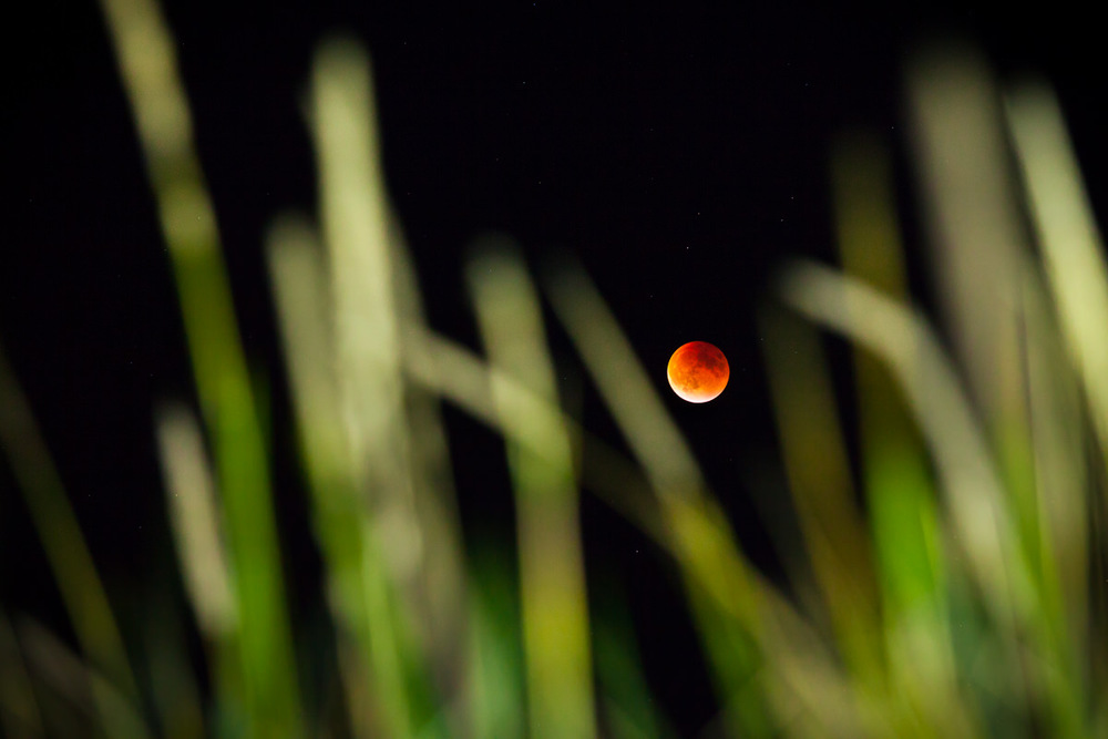 2015 featured a spectacular  supermoon eclipse  as well. The last time the earth, moon, and sun aligned like this was 1982 and the next time will be 2033! I had almost forgotten to catch it that evening but the red moon caught my eye while driving in the dark countryside and I quickly zipped down to the nearest beach. There, I framed the moon among the tall beach grass (which I lit with the light from my phone) and captured this shot just as the eclipse began to recede. Mother nature will forever be a source of wonder, awe, and inspiration and for that we should show her our greatest respect, admiration, and care.