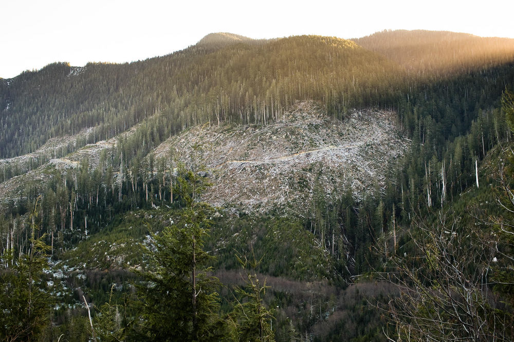 clearcut-sunset-vancouver-island-bc.jpg