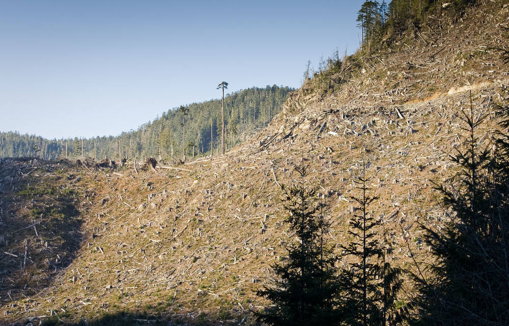 gordon-river-valley-clearcut-logging-bc.jpg
