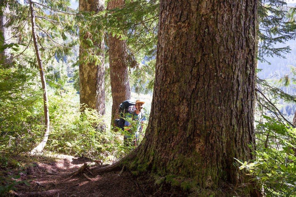 50-40-Peak-Vancouver-Island-hemlock.jpg