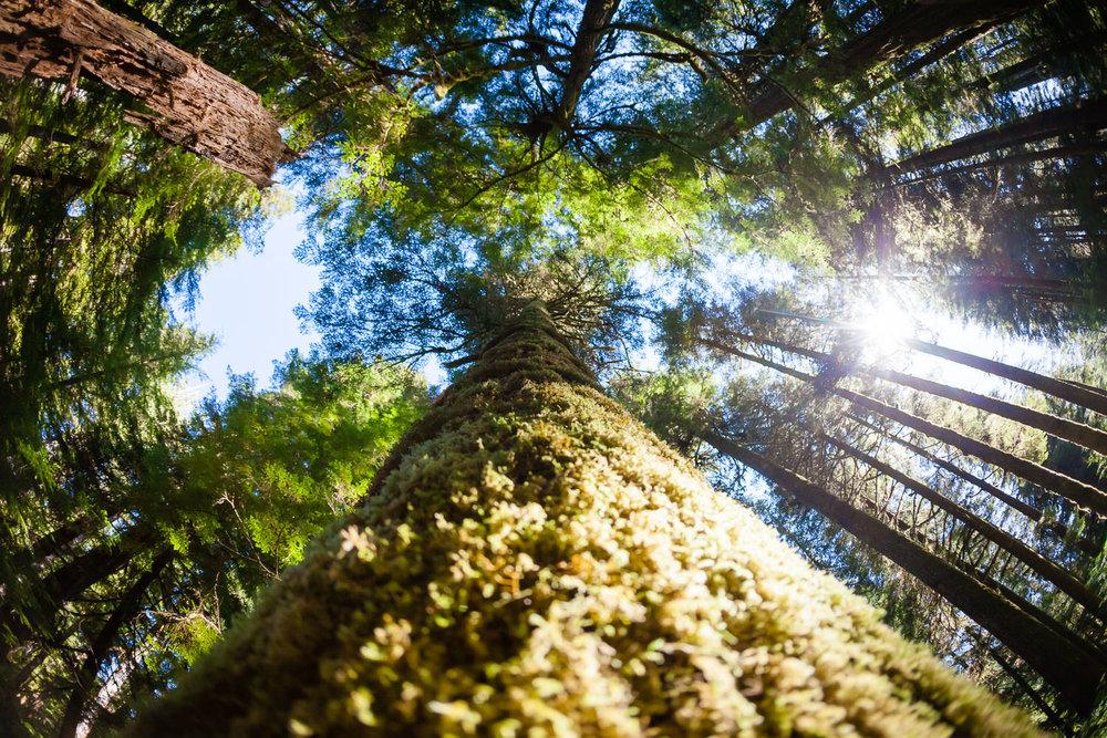 walbran-valley-fisheye-spruce-tree.jpg