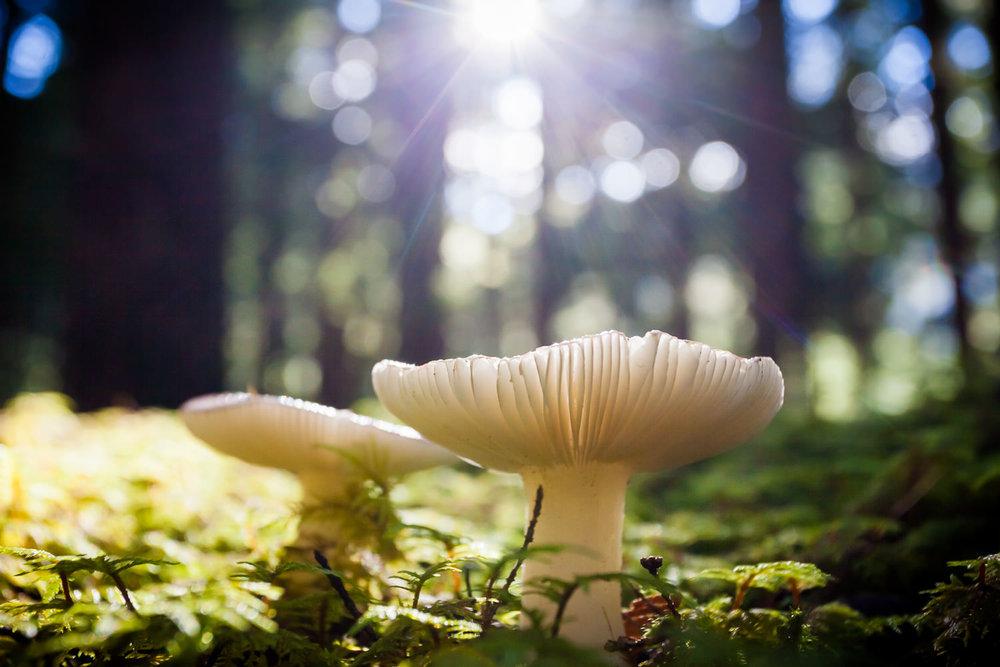 underneath-mushroom-forest-floor.jpg