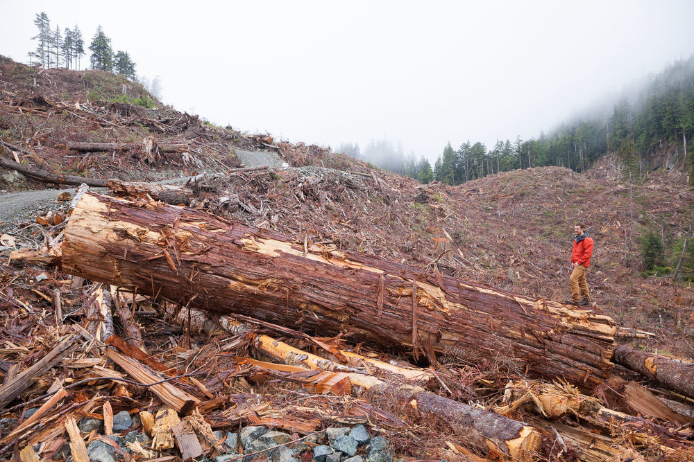 edinburgh-mt-logging-port-renfrew-258.jpg