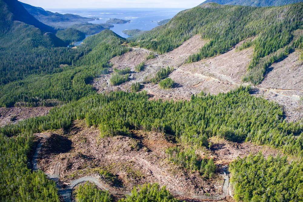 east-creek-valley-logging-aerial.jpg