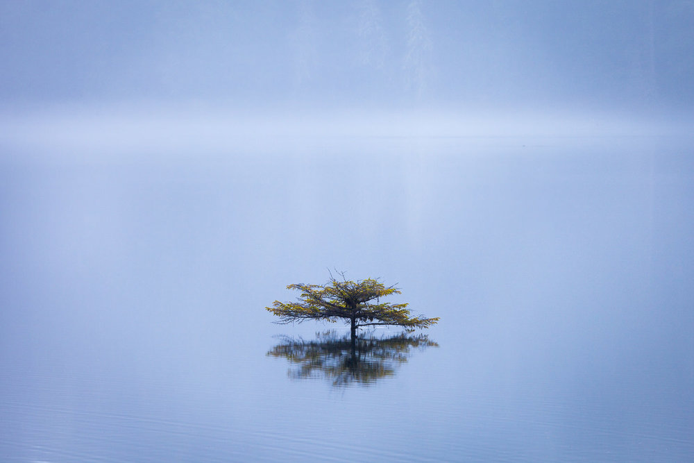 The little bonsai tree at Fairy Lake near Port Renfrew is one of the most photographed trees around, so it can be hard to capture it in a new or unique way. On this particular day though, the water level was really high and a layer of mist hung over the lake's surface, making the tree (which grows on a log) appear as though it was growing straight out of the water. It was pretty surreal looking and resulted in one of my favourite photos yet.